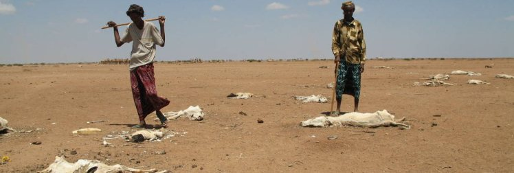 Herders in Wajir, northern Kenya, standing amid the remains of their cattle herd in the drought of 2006